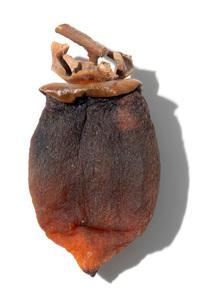 干し柿の写真素材 [FYI02072775]