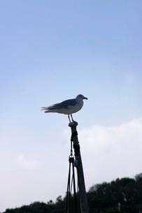 海鳥の写真素材 [FYI02072803]