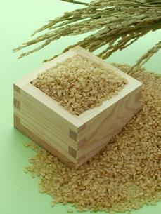 稲穂と升に入った玄米の写真素材 [FYI02073051]