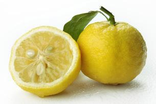 柚子の写真素材 [FYI02073108]