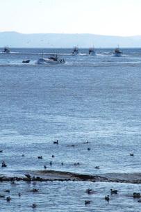 海鳥と羅臼の海の写真素材 [FYI02073181]