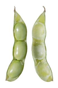 枝豆断面の写真素材 [FYI02073515]