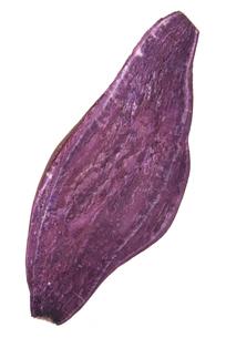 紫芋断面の写真素材 [FYI02073676]