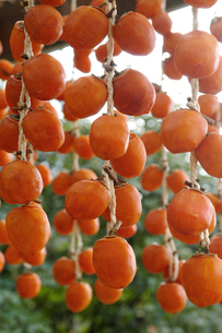吊るされた干し柿の写真素材 [FYI02073951]