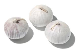 一片種大蒜の写真素材 [FYI02074375]