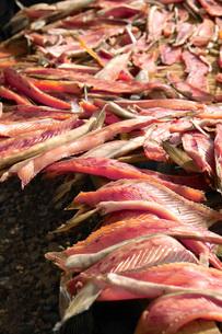 鮭トバを干すの写真素材 [FYI02074482]