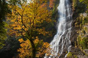 養父市天滝の紅葉の写真素材 [FYI02074624]