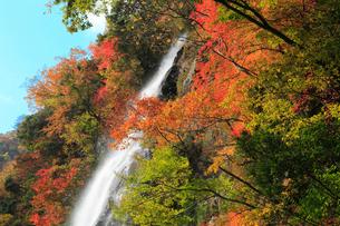 養父市天滝の紅葉の写真素材 [FYI02074682]