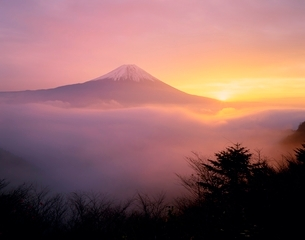 富士宮市湯之奥林道から朝焼けと雲海の富士山の写真素材 [FYI02074930]