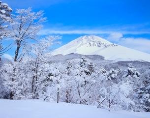 裾野市水ヶ塚公園の樹氷と富士山の写真素材 [FYI02074995]