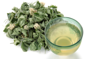 シロツメグサ茶の写真素材 [FYI02075319]