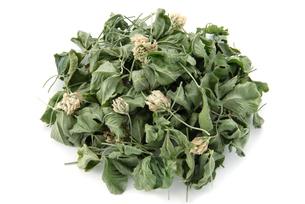 シロツメグサ茶の写真素材 [FYI02075474]