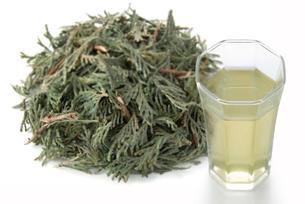 ヒノキ葉茶の写真素材 [FYI02075489]