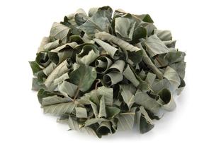 クリの葉茶の写真素材 [FYI02075545]
