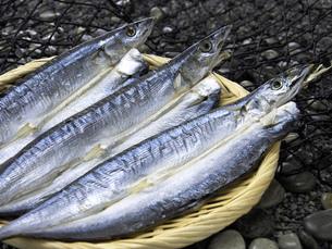 秋刀魚の開きの写真素材 [FYI02075611]
