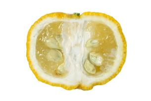 柚子断面の写真素材 [FYI02075711]