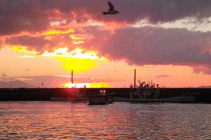 羅臼漁港の朝の写真素材 [FYI02075754]