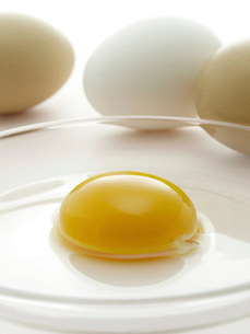 新鮮卵の黄身の写真素材 [FYI02075776]