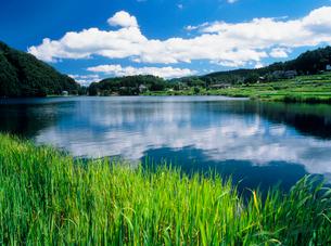 仁科三湖・中綱湖の緑と雲の写真素材 [FYI02075809]