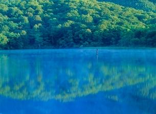 戸隠高原 鏡池の水面と朝もやの写真素材 [FYI02075828]