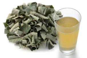 クリの葉茶の写真素材 [FYI02075859]