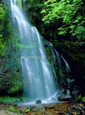 稲子 新緑の八岳の滝の写真素材 [FYI02075931]
