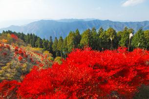 高野龍神スカイラインの紅葉の写真素材 [FYI02075949]
