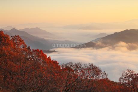 養父市宮垣の紅葉と雲海の写真素材 [FYI02075951]