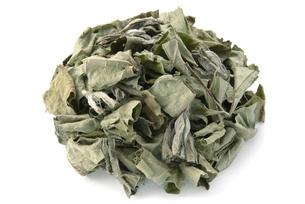 キクイモ茶の写真素材 [FYI02075957]