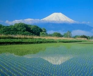 内野の水田と富士山の写真素材 [FYI02076021]