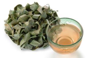 ビワの葉茶の写真素材 [FYI02076107]