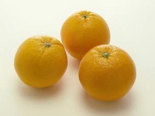 オレンジの写真素材 [FYI02076121]