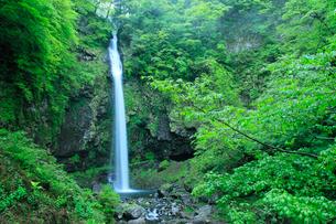 阿弥陀ヶ滝の新緑の写真素材 [FYI02076195]