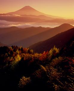 安倍林道の朝日に染まる紅葉と富士山の写真素材 [FYI02076202]