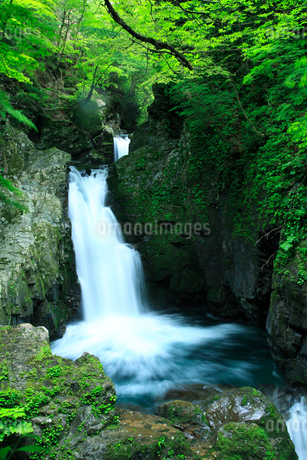 三ツ滝の新緑の写真素材 [FYI02076237]