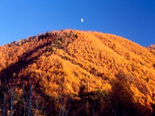 乗鞍高原 一ノ瀬園地から見る唐松紅葉の山肌と月の写真素材 [FYI02076324]