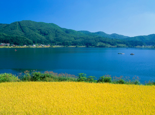 仁科三湖・木崎湖畔の稲田と釣り船の写真素材 [FYI02076327]