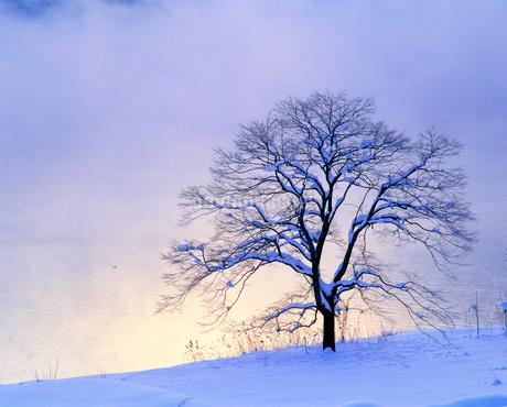 仁科三湖・木崎湖畔の雪の木と朝靄の写真素材 [FYI02076348]