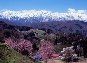 小川村立屋地区のサクラと北アルプスの写真素材 [FYI02076373]
