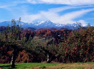 小川村成就のリンゴ畑と鹿島槍ヶ岳の写真素材 [FYI02076428]
