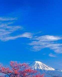 岩本山公園のウメと富士山の写真素材 [FYI02076435]