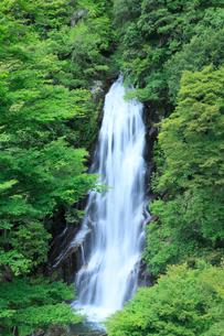 荒滝の新緑 の写真素材 [FYI02076438]