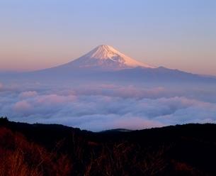 だるま山高原より雲海と朝焼けの富士山の写真素材 [FYI02076482]