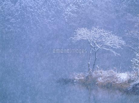 仁科三湖・中綱湖の降雪と雪の木の写真素材 [FYI02076485]