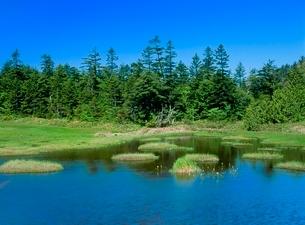 志賀高原 新緑の四十八池の写真素材 [FYI02076558]
