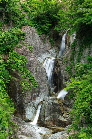 かもしか滝の新緑の写真素材 [FYI02076695]