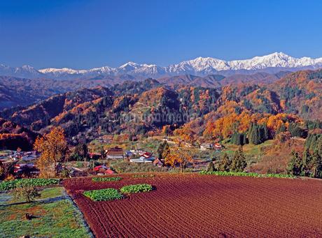 成就地区の紅葉と北アルプス・爺が岳,鹿島槍ヶ岳の写真素材 [FYI02076713]