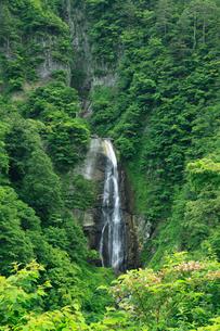 シリタカ滝の新緑の写真素材 [FYI02076785]