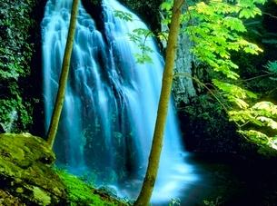 新緑の不動滝の写真素材 [FYI02076956]