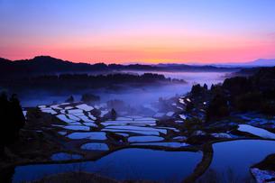 棚田の夜明けと霧 星峠の写真素材 [FYI02076966]